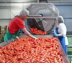 Produktion getrockneter Tomaten bei der Zifru Trockenprodukte GmbH