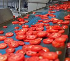 Die in Scheiben geschnittenen Tomaten sind bereit für die Trocknung
