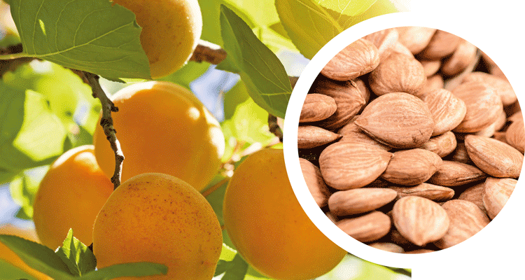 Typical sensory characteristics of apricot kernel oil